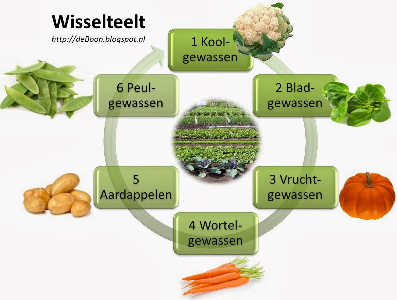 Wisselteelt (1) (1)